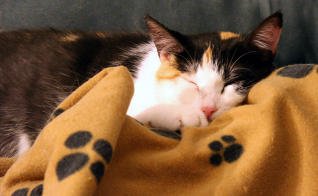 A calico kitten sleeps on a blanket covered with paw prints.